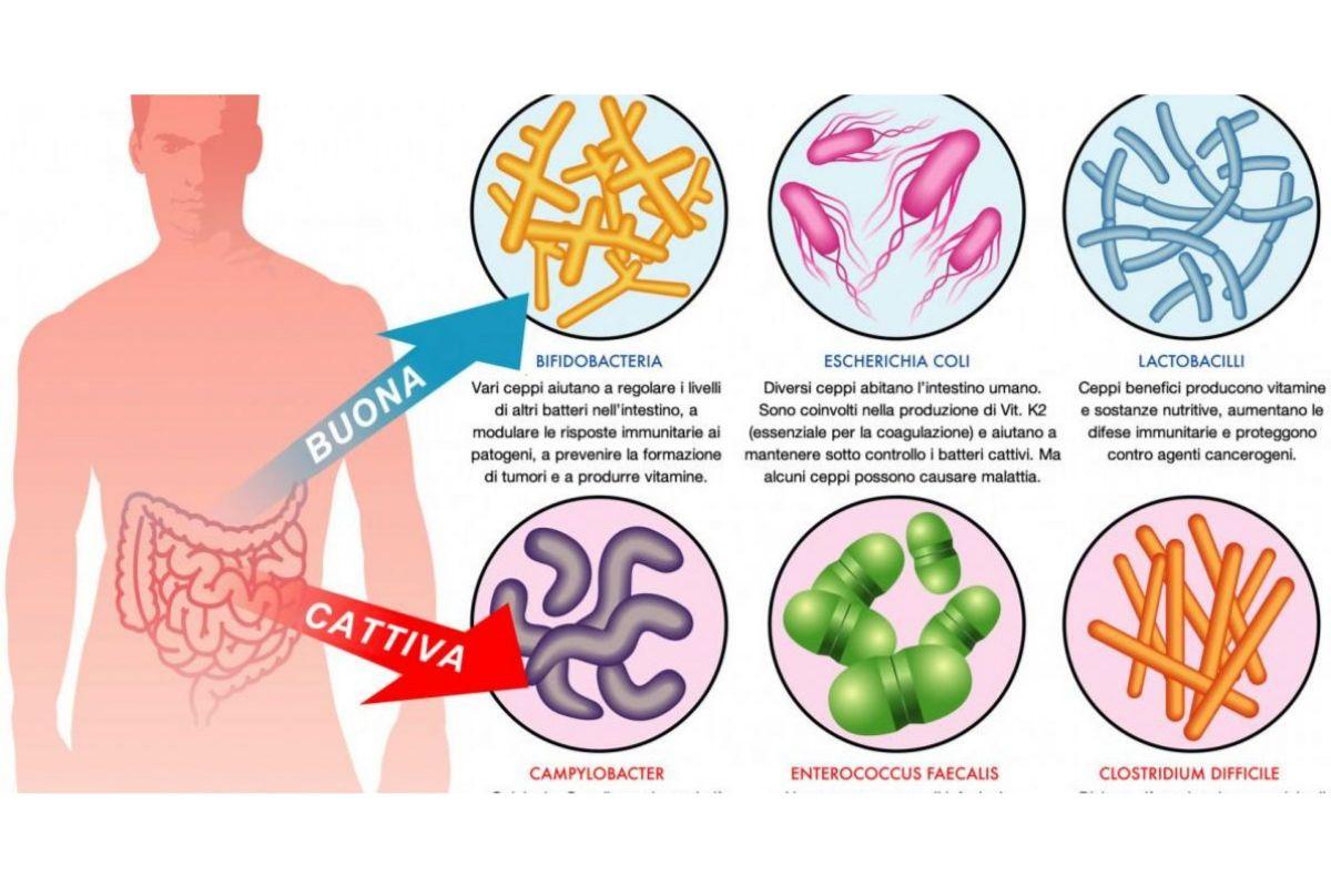 dieta dimagrante con estratti alimenti che aumentano i batteri intestinali buoni